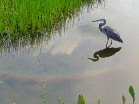Wildlife hotspots like Green Cay Nature Center in Boynton Beach are ideal places to mark American Wetlands Month.