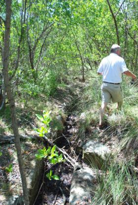 Abandoned mosquito trenches have gummed up the natural water flow on the land.