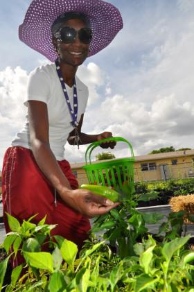 Rachelle Lawson picks jalapeños from the urban garden project in Dania Beach.