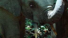 Wild Africa: Jungle