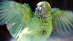 Nature Parrot Confidential