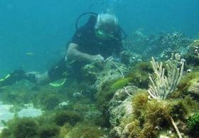 A diver inspects the remnants of what may be the Santa Maria.