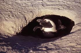 Wild! Penguin Under Siege