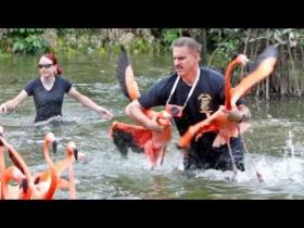 Zoo Miami Communications Director and Goodwill Ambassador Ron Magill helps move flamingos.