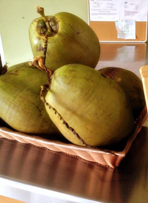 Coconuts/stock photo