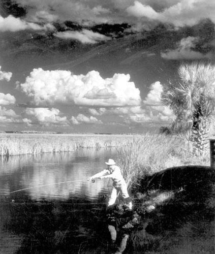 Fly fishing near the Tamiami Trail circa 1950.