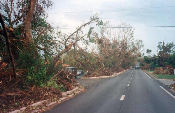 Looking down Bird Road at trees damaged by Hurricane Andrew.