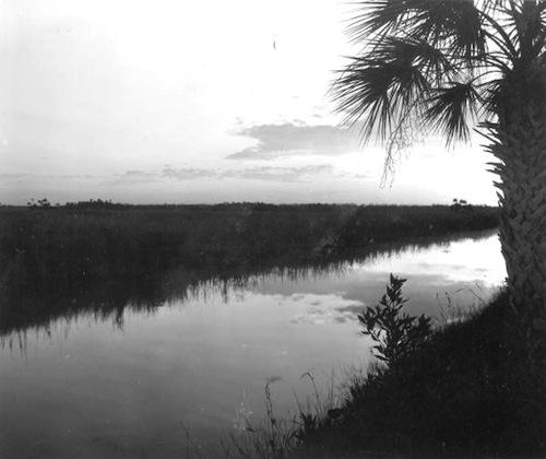 Picture of the Everglades (1966)