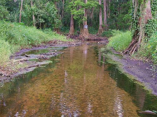 Water Pollution Wlrn