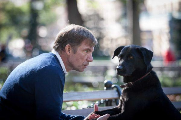 "John Homans, executive editor of New York magazine and author of ""What's a Dog For?"" in Gramercy Park with his dog, Stella, a Labrador mixed breed adopted from the North Shore Animal League."