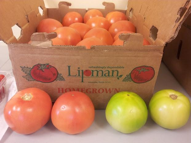 On many Florida farms, tomatoes are picked green and then ripened.