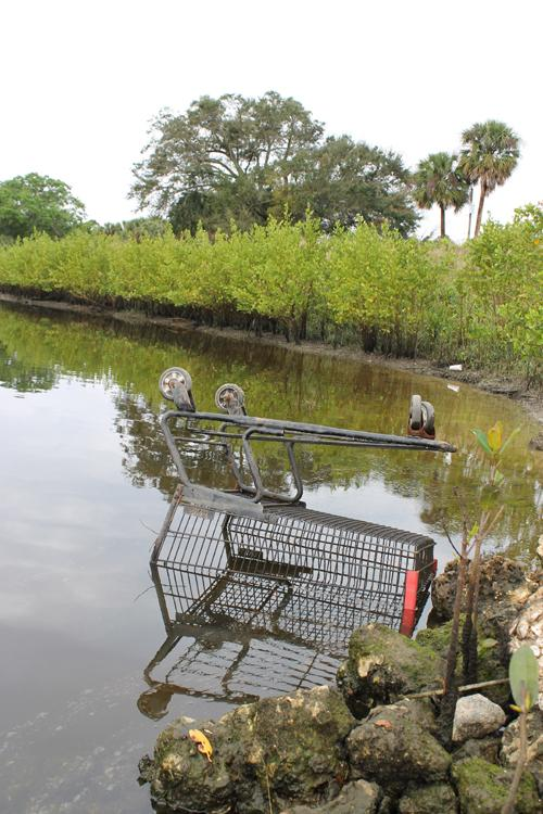 A shopping cart pulled from the water at Limestone Creek Natural Area in Jupiter.