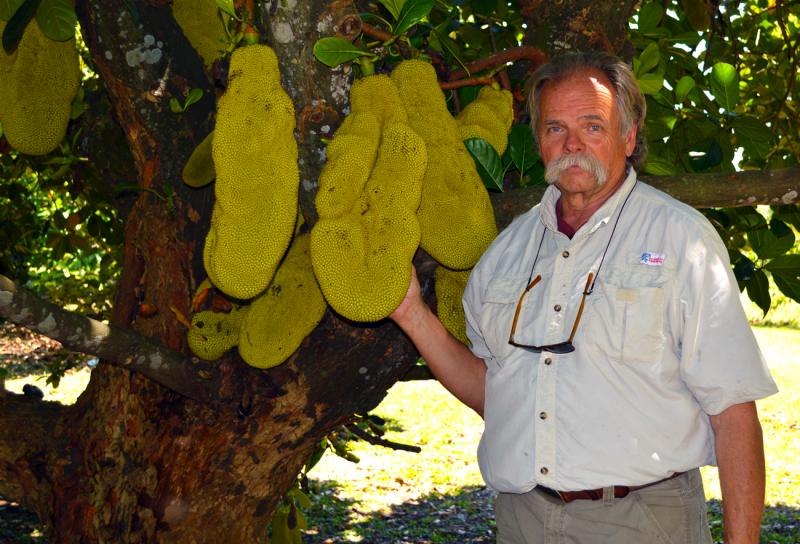 Fruit and Spice Park Manager Chris Rollins stands next to a jack fruit tree, one of the hundreds of exotic fruits on display at the park in the Redlands.