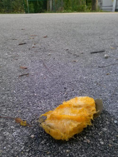 Find a mango seed on the street.  Immediately conduct full search of trees in the vicinity.  That's so Miami.