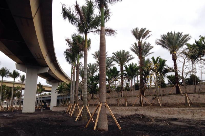 Landscape architect Elisabeth Hassett says some of the large palms are carefully placed to follow the curve of the highway as a kind of subconcious signage.