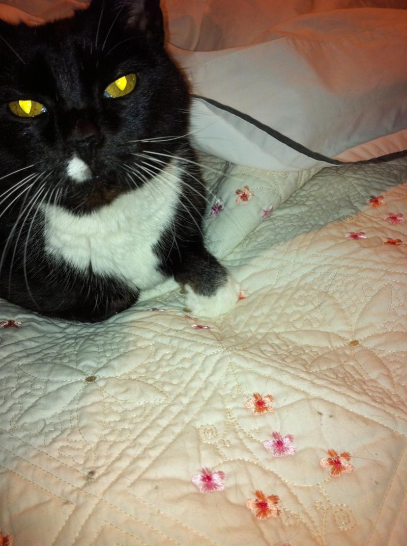 Bonnie's cat Sammy