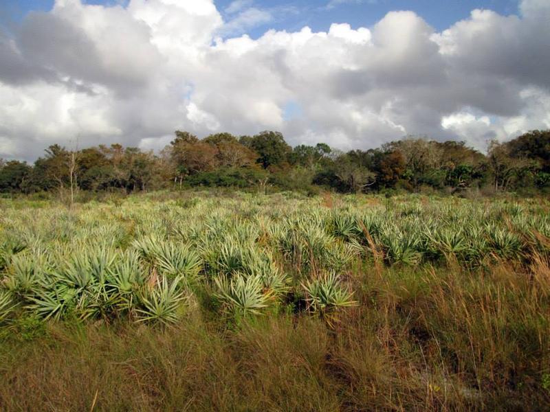 South Florida Wildlands Association