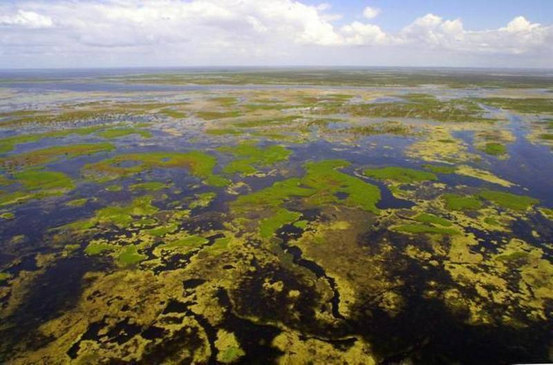 Gov. Ron DeSantis has recently announced an executive order that calls for more funding for Everglades restoration.