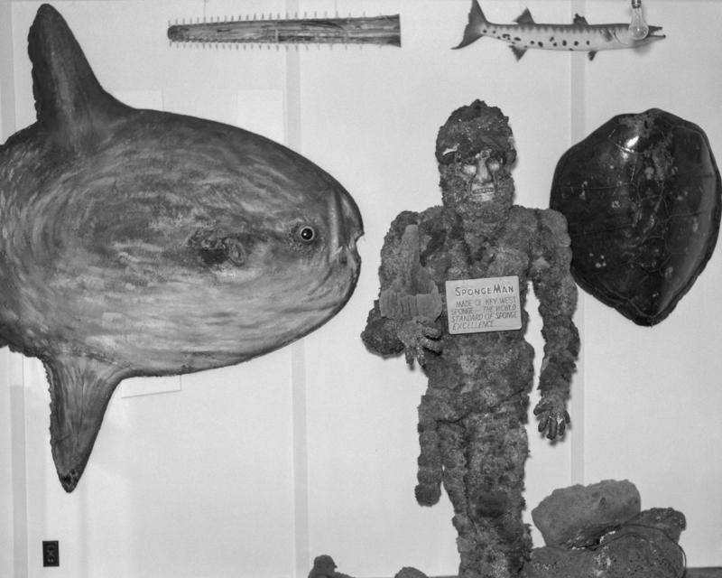 The curio shop was an early tourist attraction, with unusual items like a giant ocean sunfish and a man made out of sponges.