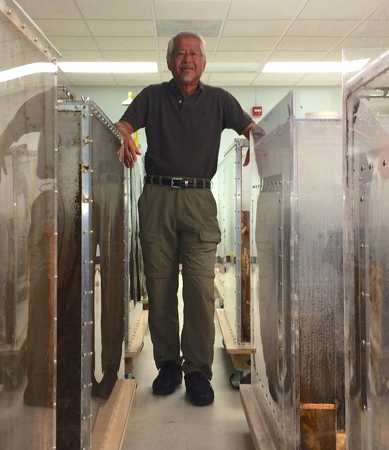 UF Distinguished Professor of Entomology Nan-Yao Su stands among his termite experiments in Davie.