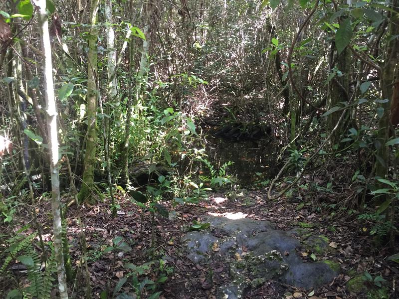 Small, deep pits of water along the Gumbo Limbo Trail
