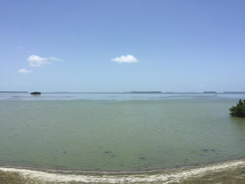 Overlooking the end of Florida, into the much saltier Florida Bay.