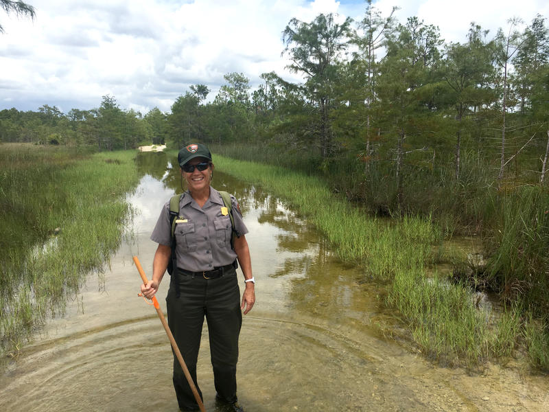 Lisa Andrews, outreach and education specialist at Big Cypress National Preserve, gets ready to lead a wetwalk tour into an alligator hole.