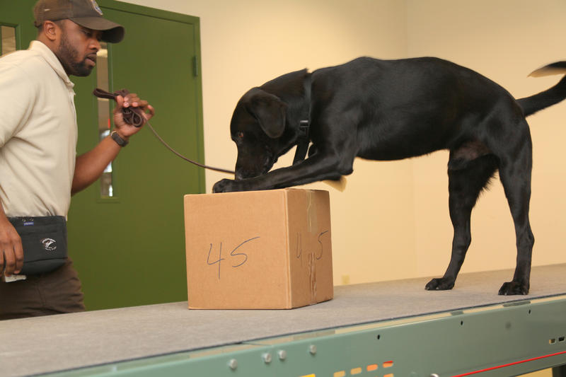 The U.S. Fish & Wildlife Service relies on the Miami-based team of Viper, a black lab, and Inspector Amir Lawal to screen for animal trafficking in airports and seaports from South Florida to Chicago.