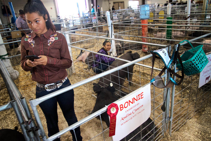 Analisa Cisneros, left, and Jocelyn Valadez, both of Clewiston, prep their hogs for auction at the South Florida Fair in West Palm Beach on Jan. 21, 2016.