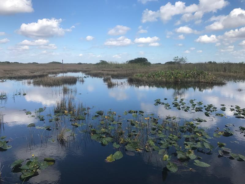 Located about 40 miles west of Miami, Water Conservation Area 3 is intended to help water managers control wet-season flooding and prevent dry-season droughts.