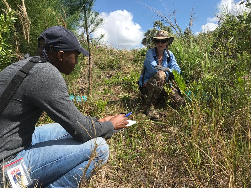CNN reporter Darran Simon interviews Donna Kalil as she hunts for pythons on state land near Homestead.