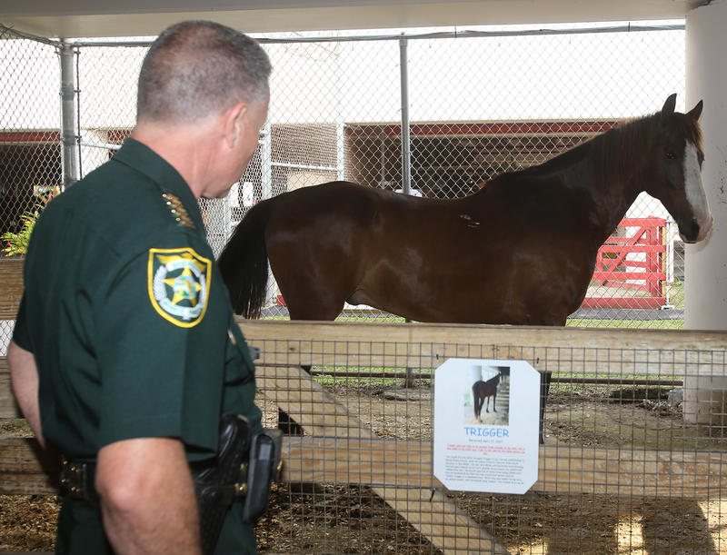 Monroe Sheriff Rick Ramsay checks out Trigger at the horse's new home — the Monroe County Sheriff's Office Animal Farm.