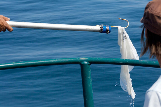 Coral Gables just voted to ban plastic bags - even though the Florida Legislature says it can't.