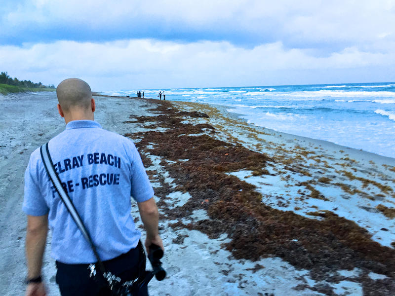 Delray Beach Fire Rescue Capt. Mike Rodriguez responds to a report of a body floating in the Atlantic Ocean. In fact, it was a sea turtle.