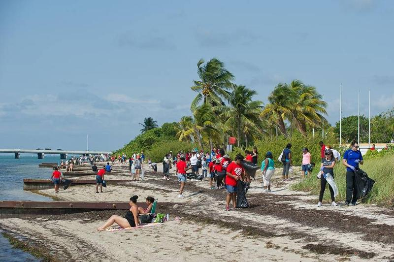 Hundreds of volunteers clean up litter in and around Biscayne Bay at the annual Baynanza festival. In this 2015 file photo, volunteers work at Virginia Key Beach Park.