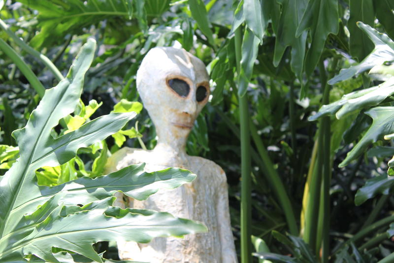 We;re not sure where this alien came from or why  it's lurking in the bushes.