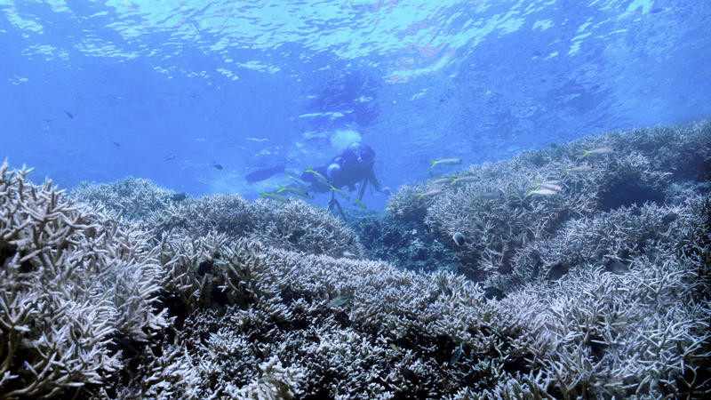 Coral reefs are among the most diverse ecosystems on earth.
