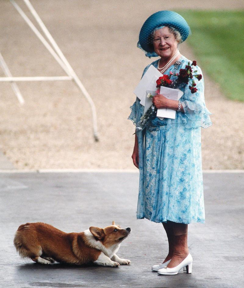 The Queen and one of her beloved corgis