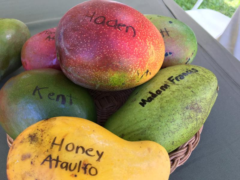 Some of the varieties on display at the Mango Festival.