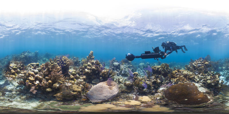 "NOAA's Coral Reef Watch program helped guide the ""Chasing Coral"" documentary team about where to place cameras to capture coral bleaching."