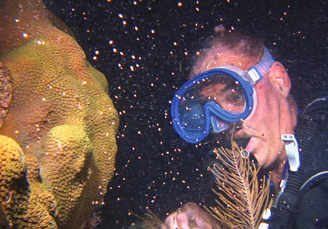 Spencer Slate watches a boulder coral release gametes off Key Largo, in the Florida Keys National Marine Sanctuary.