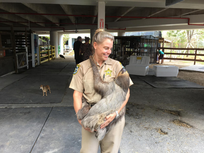 Farmer Jeanne Selander rode out Irma with 100 animals, including Mo the sloth, in the Monroe County jail on Stock Island. The generator failed, so they were stuck in the dark in crates and holding cells.