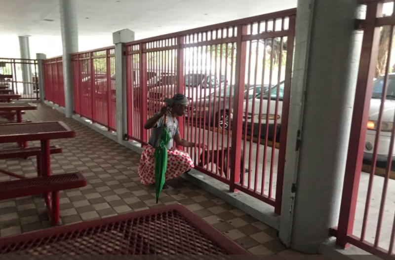 People taking shelter at Miami Edison Senior High took turn petting and feeding this stray dog.