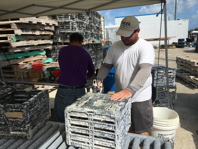 Daniel Padron works on stone crab traps before this year's season, which opens Oct. 15.