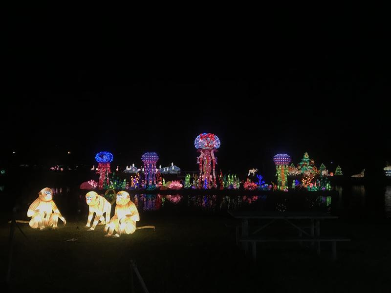 jellyfish lantern at night