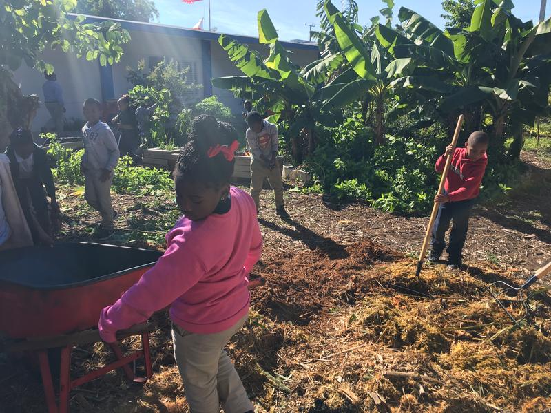 In 39 Food Forests 39 Students Grow Vegetables And Their Science Test Scores Wlrn