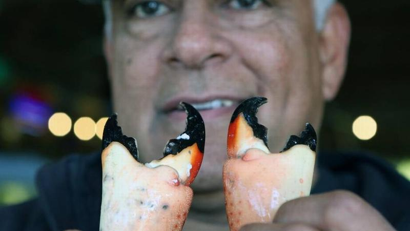 Walter Flores holds a pair stone crab claws at his Golden Rule Seafood shop in Palmetto Bay, where the Florida delicacy is fetching high prices because of a shortage in catches. Commercial trappers hope the recent cold fronts could revive the season.