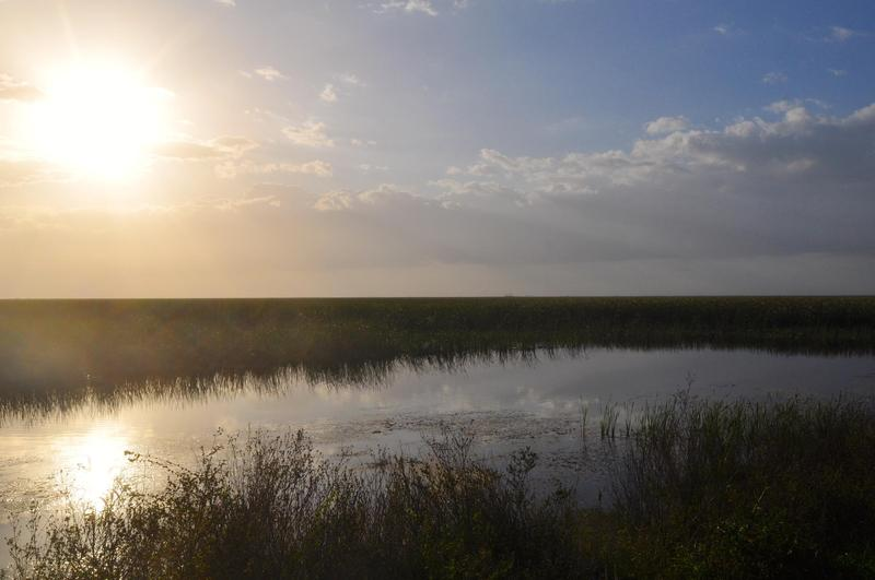 Morning in the Everglades in western Broward County.