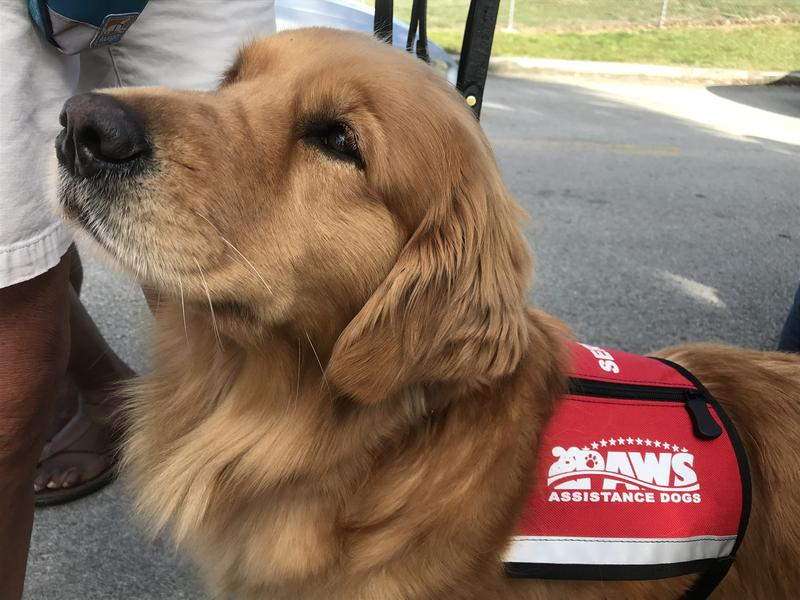 PAWS assistance dogs were stationed outside of the school gate, for teachers, students, and parents to sit with after seeing the high school campus where the shooting happened.