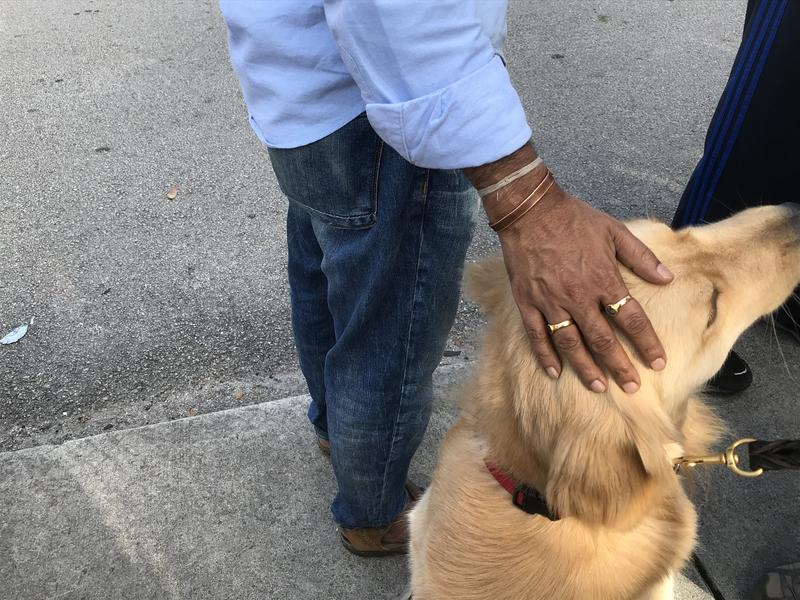 A man pets one of the five golden retriever service dogs from PAWS on Sunday outside of Marjory Stoneman Douglas High School.